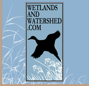 Wetlands and Watershed.com
